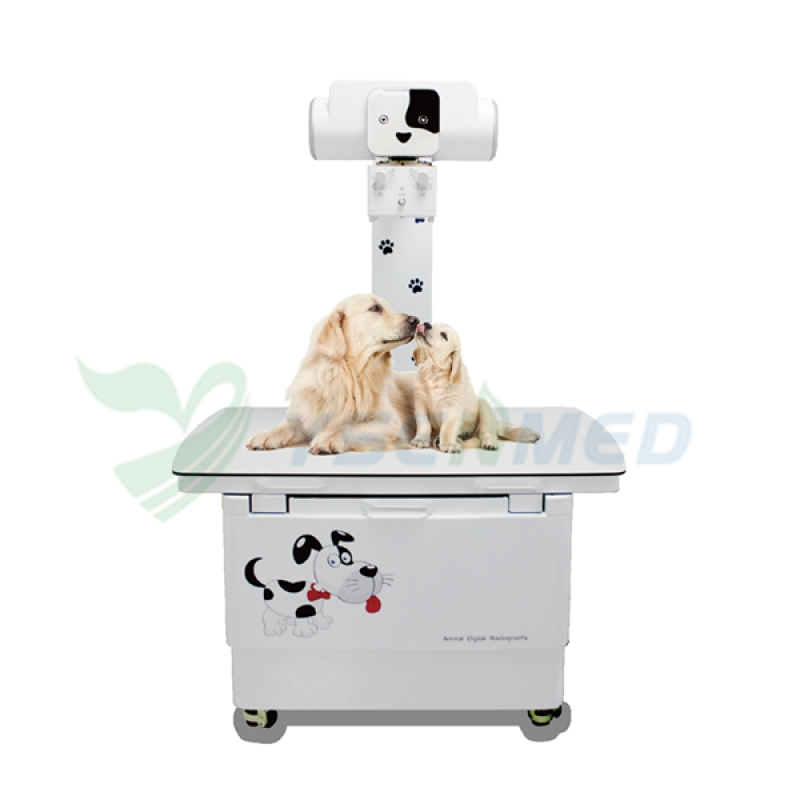 Veterinary Digital Radiography X Ray YSX200VET Plus